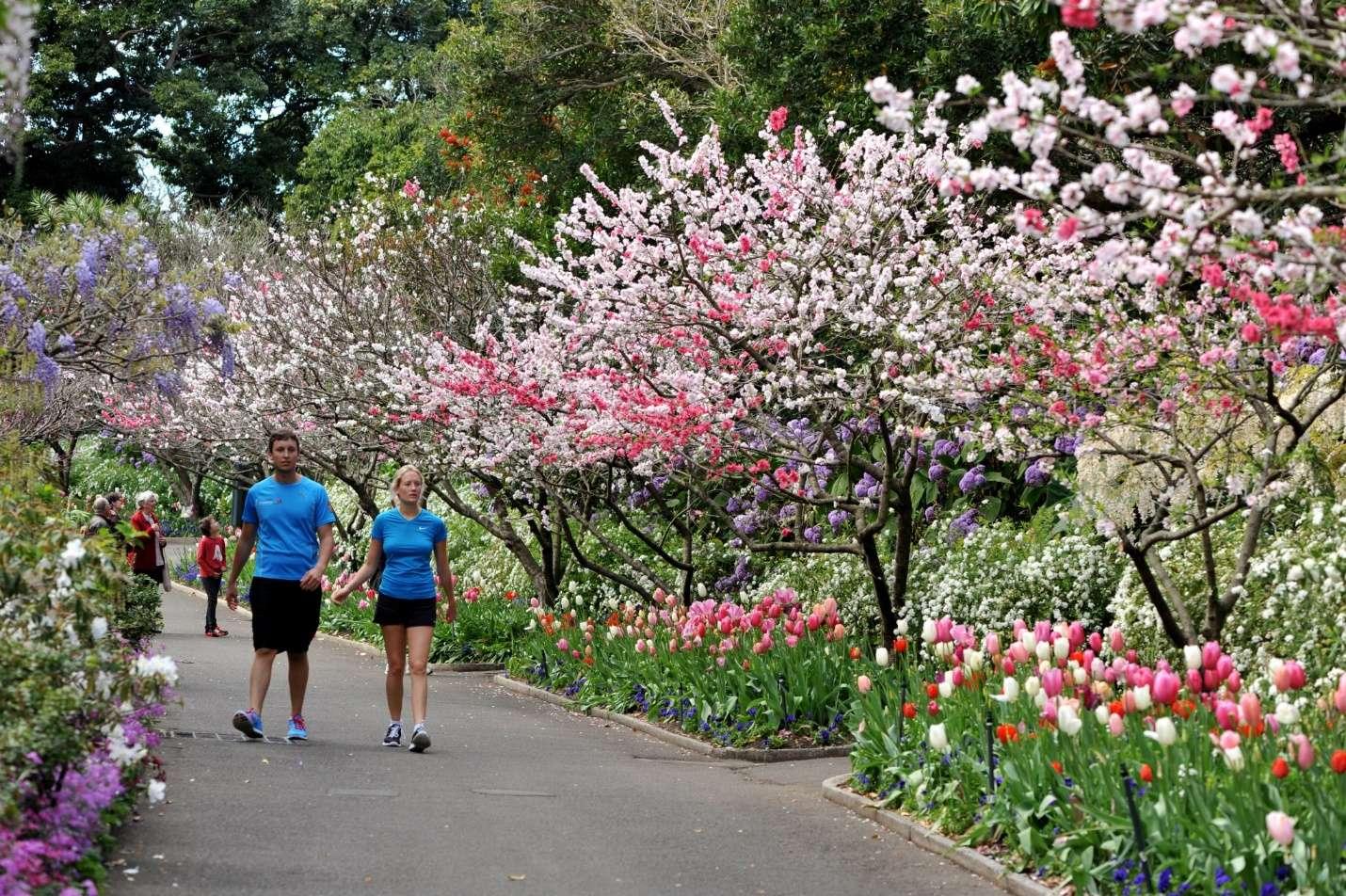 Lễ hội hoa mùa xuân tại Úc