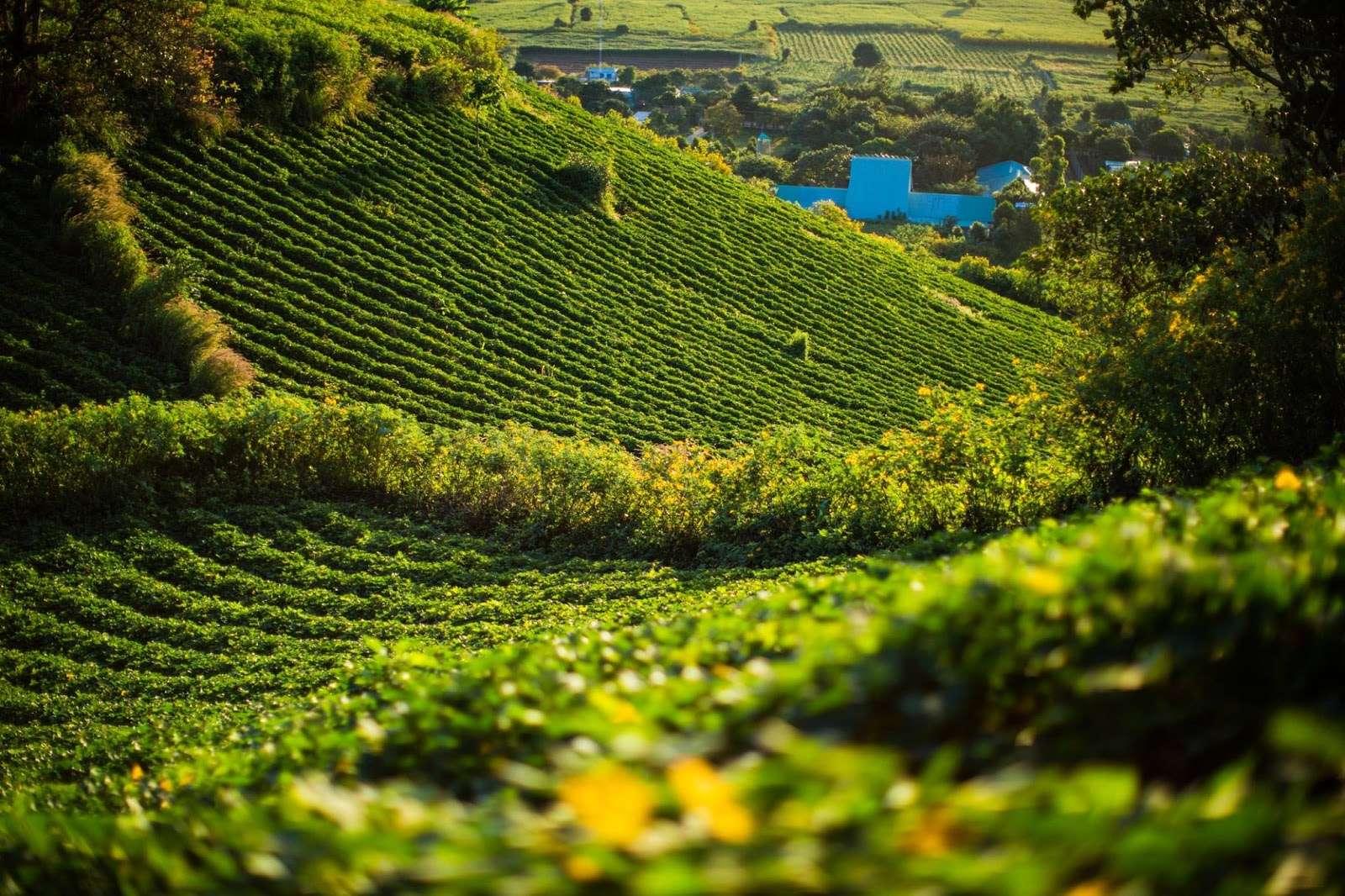 Du lịch việt nam giá rẻ đừng quên đến Núi Chư Đăng Ya mùa hoa dã quỳ