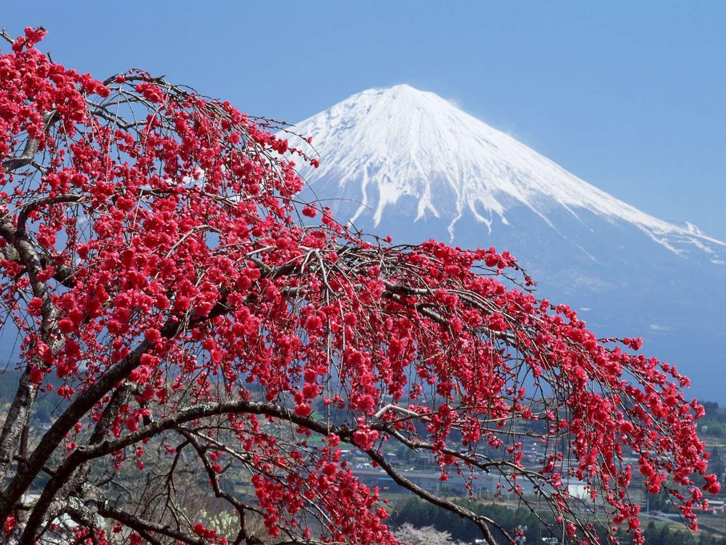 Mùa đông thú vị tại Nhật Bản