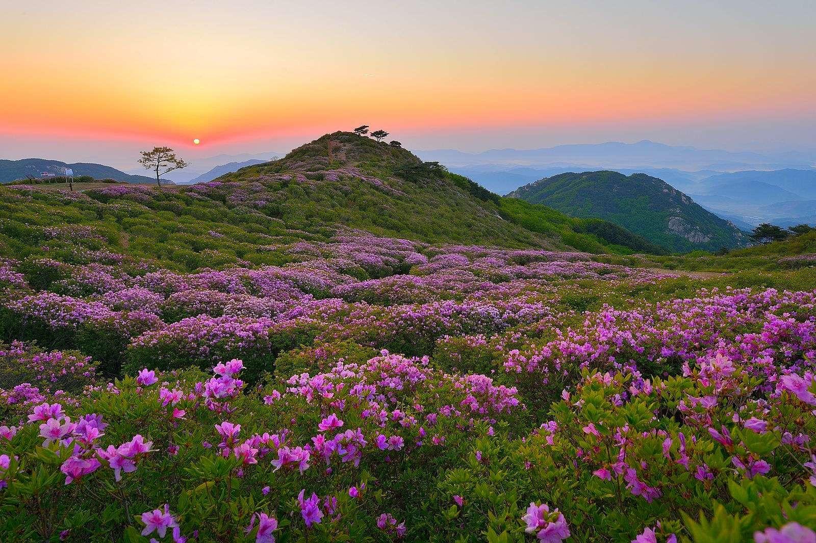 Núi Hwangmaesan