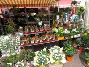 Chợ hoa buổi sáng (The Cours Saleya)